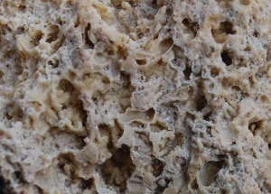 """Close-up of the porous tuff from """"Tüfels Chilen"""""""