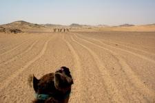 Egypt (Gharb Aswan): On camel back to St. Simeon's monastery