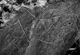 Late Palaeolithic rock art in the Coa Valley in Portugal. Note the similarity in style - and the horse! Source: Henrique Matos, Wikimedia Commons