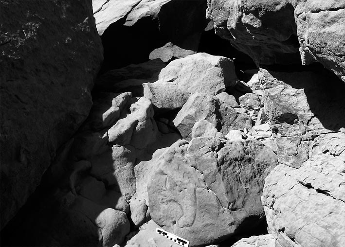 Part of a hippo among the boulders in Subeira. Photo: Per Storemyr