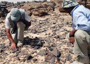 Dirk Huyge (left) and Adel Kelany looking for debitage of Early Palaeolithic stone tool working. Photo: Per Storemyr