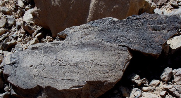 Broken boulder with Late Palaeolithic rock art in Subeira: A fish (top) and a hartebeest (below, right) can be seen. Photo: Per Storemyr
