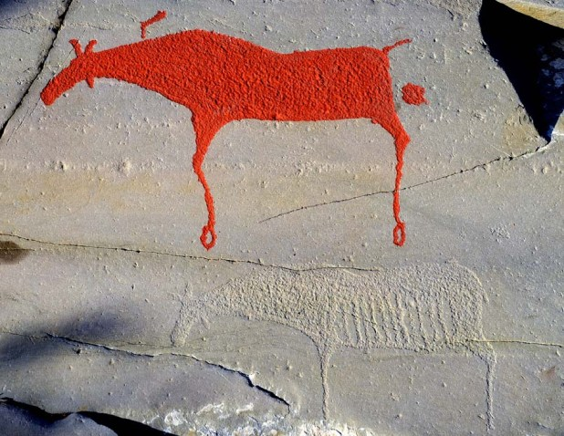 The Hjemmeluft site. More than 6000 year old, pecked elks; one has recently been painted in red, the other not. Over the last few years the rock surface has also been regularly treated with alcohol to keep lichen away. Photo: Per Storemyr