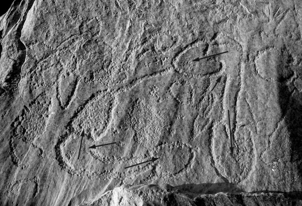 Mushrooms? Penises? No, these are depictions of more than 7000 year old fish traps at el-Hosh in Upper Egypt. Arrows indicate the movement of fish to be trapped. Photo: Per Storemyr