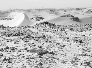 The central field of upright stones at the southern margin of Wadi el-Faras, looking north. A well-worn path leads to a stone circle in the middle of the plateau. Photo: Per Storemyr