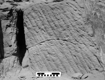 Segmented chisel tracks in the New Kingdom part of the Nag el-Hammam sandstone quarry near Gebel el-Silsila. Note the deep, narrow trench at left which must have been cut with a long chisel. Smallest scale division is 1 cm. Photo by JAMES HARRELL.