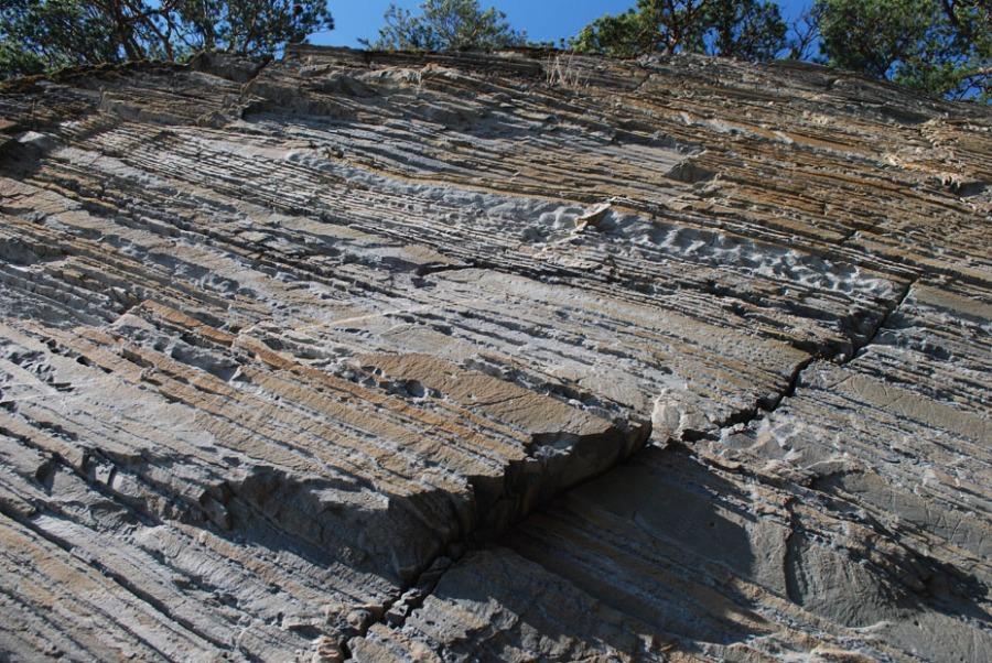 Lagrekke med Stjørdalsandstein ved Storvika på Sutterøya. Her ser vi hvordan steinen tar seg ut i en bratt fjellskrent, vekslinger mellom kompakt sandstein og lett forvitrede lag med kalkmineraler. Steinen er av samme kvalitet som den vi finner på Værnes kirke. Foto: Per Storemyr.