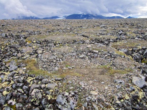 Islinser som har dannet hevede mønstre i morenemasser ved Juvasshytta i Jotunheimen. Foto: Per Storemyr
