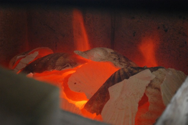 Burning seashells - scallop - to make lime wash and mortar in the small kiln in Millstone Park