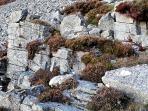 Mulig steinbrudd på Skårbø. Foto: Per Storemyr